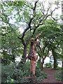 TQ4088 : Dead tree in Tarzy Wood by Roger Jones