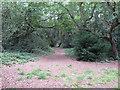 TQ4088 : Footpath in Tarzy Wood by Roger Jones