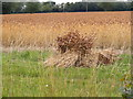 TM2766 : Stooks of Corn off the A1120 Saxtead Road by Adrian Cable
