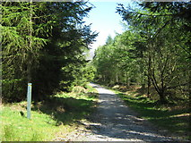 NX4464 : On the yellow trail, Kirroughtree Forest by Ann Cook