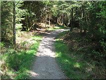 NX4465 : Path between Little Bruntis Loch and Bruntis Loch by Ann Cook