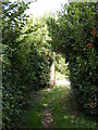 TM2450 : Footpath to Low Road by Geographer