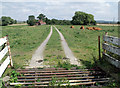 SK9177 : Cattle Grid and Cows on track from Carlton Lane by J.Hannan-Briggs