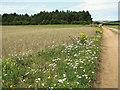 TF8641 : Wild flowers beside path to Burnham Thorpe airstrip by Evelyn Simak