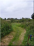 TM4160 : Sandlings Walk footpath to Sloe & Back Lanes by Geographer