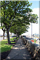 O2428 : Tree-lined Walk by Dun Laoghaire Harbour, Ireland by Christine Matthews