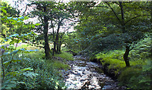 NY3200 : Yew Tree Beck by Ian Greig