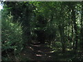 TQ4562 : Byway in Great Molloms Wood by David Anstiss