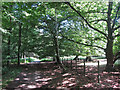 TR0551 : North Down's Way through King's Wood by Oast House Archive