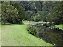 SE2768 : River Skell, Fountains Abbey by David Dixon