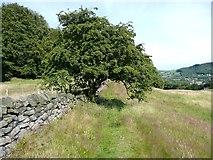 SE0026 : Hawthorn arch at Wood Side, Mytholmroyd by Humphrey Bolton