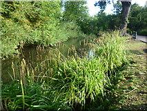 TQ4666 : Water channel in Priory Gardens, Orpington by Marathon