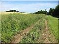 NT5582 : Farm track, Balgone by Richard Webb