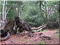 TL4300 : Fallen Tree by Roger Jones
