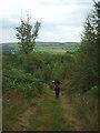 SD3679 : Footpath, Barns Bank Plantation by Karl and Ali