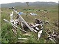 G9393 : Bog wood by Jonathan Wilkins
