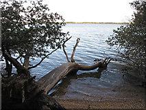TM1633 : Dead Tree in the Water by Roger Jones