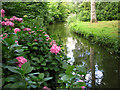 TG3613 : Hydrangea in Fairhaven Water Garden, South Walsham by Evelyn Simak