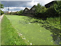 TQ2282 : Duckweed on the Grand Union Canal by David Hawgood