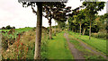 J5878 : Railway path, Donaghadee (5) by Albert Bridge