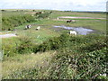 TQ5375 : Horses on the marshes by Marathon