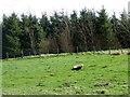 SE1477 : Moles at Colsterdale by Maigheach-gheal