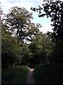 TQ4370 : Path in Chislehurst Common by David Anstiss