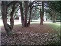 SK8608 : Park in central Oakham by Stephen Craven
