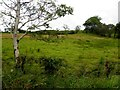 G9280 : Drumgoman Townland by Kenneth  Allen