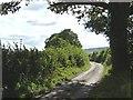 SO5475 : Squirrel Lane by Christine Johnstone