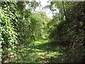 TL5844 : Bartlow: trackbed of the Audley End Branch Line by John Sutton