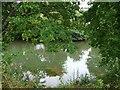 SO5274 : The River Teme by Christine Johnstone