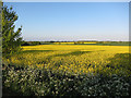 TL2844 : Oil seed rape field by Hugh Venables