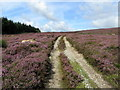 SE0757 : Track above Laund Pasture Plantation by Chris Heaton