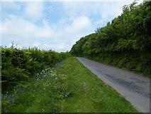 SS8928 : Dulverton : Country Lane by John Courtney