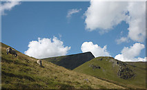 NY3328 : Sheep by the track to Scales Tarn, Blencathra by Karl and Ali