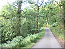 SS9043 : Minor road, on the side of East Water Valley by Roger Cornfoot