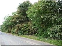 SE5214 : Western edge of Barnsdale Wood by Christine Johnstone
