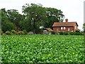 SE5113 : Cabbages behind Barnsdale Cottages by Christine Johnstone