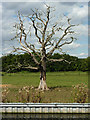 SK6279 : Osberton Park by Richard Croft