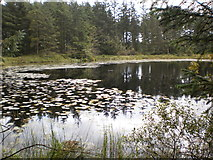 SD3494 : Grizedale Tarn by Peter S