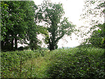 TG1312 : On the southern edge of Stonyhole Plantation, Ringland by Evelyn Simak