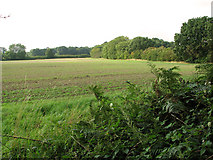 TG1312 : Field west of Sandy Lane, Ringland Hills by Evelyn Simak