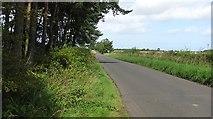 NU2024 : A road passing Allansford Plantation by Richard Webb