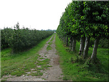 TR3256 : Orchards on Felderland Farm by Nick Smith