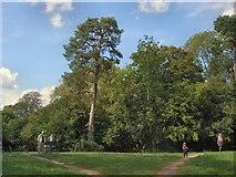 SU7251 : Trees near Odiham Castle by Paul Gillett