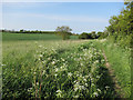 TL6146 : Harcamlow Way by Hugh Venables