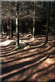 SE9697 : Public Footpath, Harwood Dale Forest by Mick Garratt