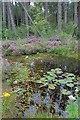 SE9796 : Fire Pond, Standingstones Rigg by Mick Garratt