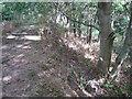 SP2282 : Footpath through Snail's Grove  by Robin Stott
